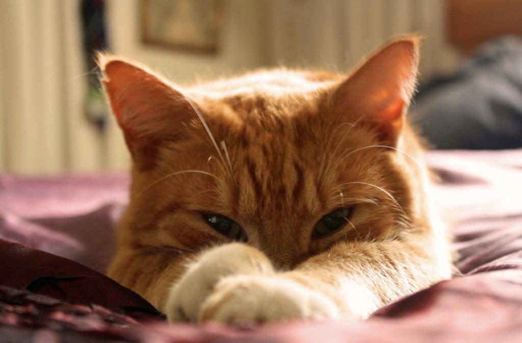 Кот взгляд