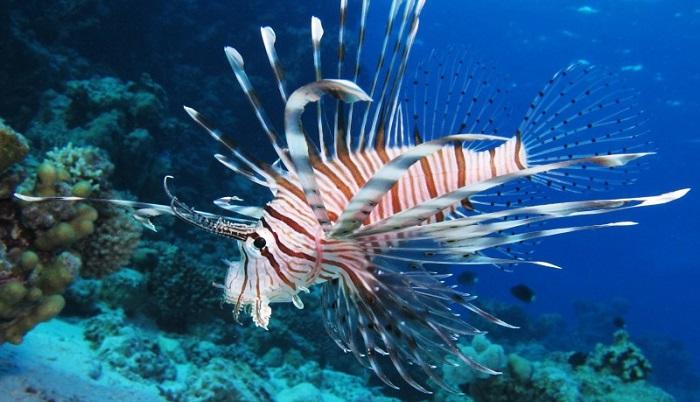 20 малоизвестных рыб-убийц с фото и описанием