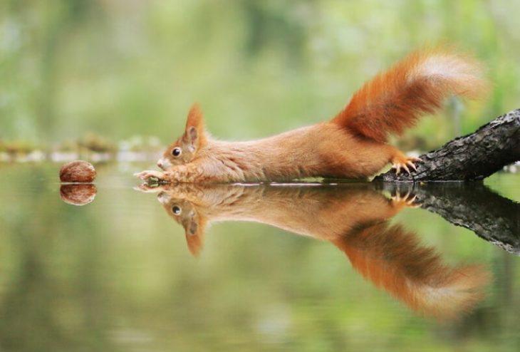 50 очень забавных фото из мира природы