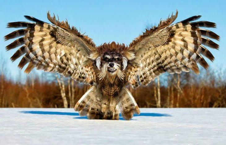 40 гибридов странных животных, выведенных в фотошопе