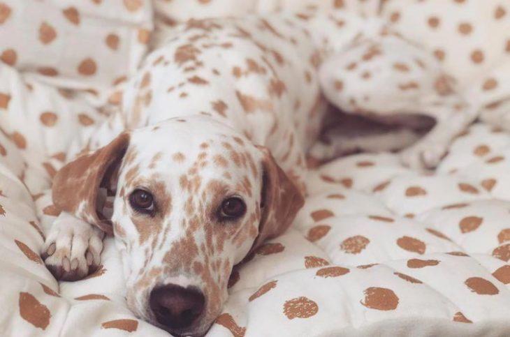 50 курьезных фото животных, которые умеют отлично маскироваться