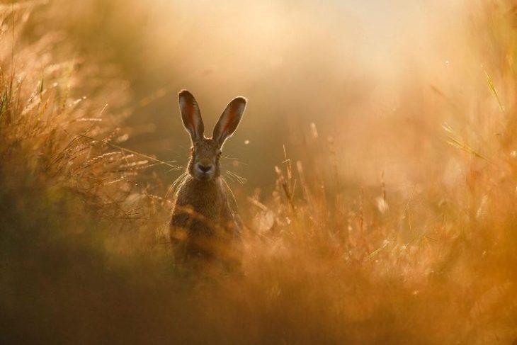 Восхитительные снимки дикой природы