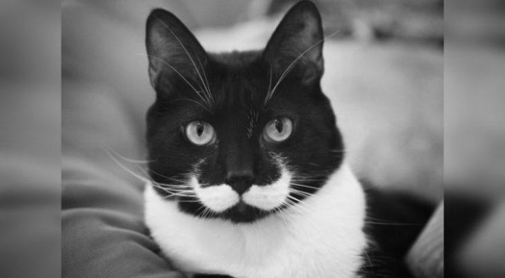Коты с уникальным окрасом: 40 впечатляющих фото