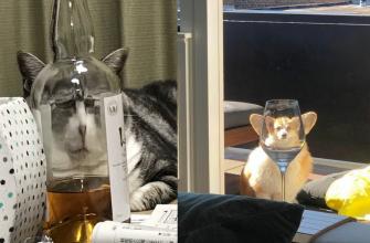 снимки домашних животных, сделанные через стекло