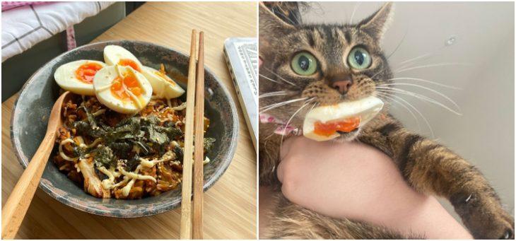 животные - воришки еды