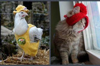 животные модники