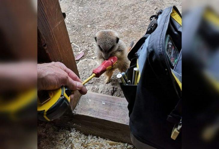 животные помощники